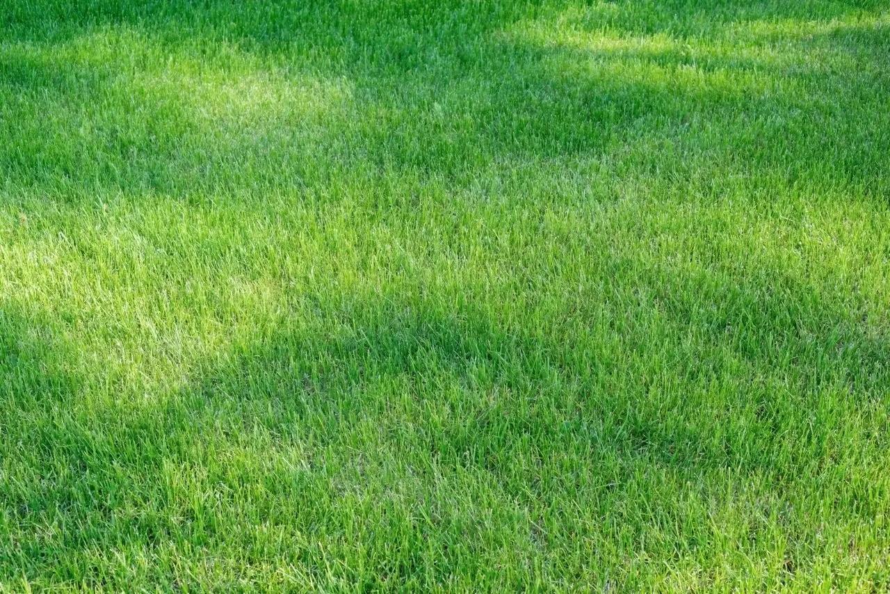 Centipede Grass Sod for sale in Baton Rouge, Denham Springs, Prairieville, Gonzales, Zachary Louisiana
