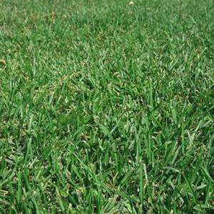 centipede grass sod baton rouge