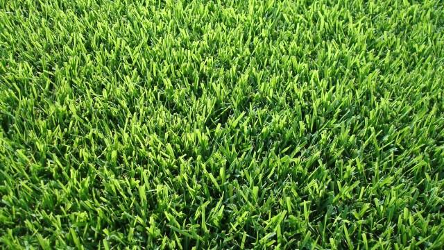 Empire Zoysia Sod Grass
