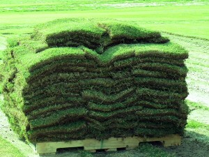 wholesale bulk sod grass for sale by the pallet