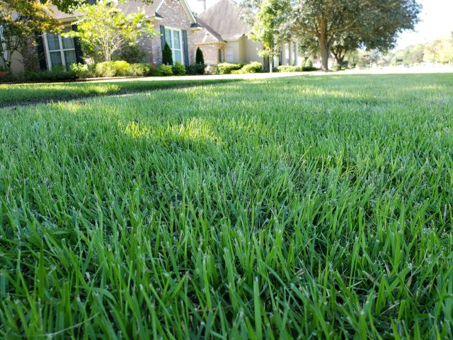 sod installation cost estimate
