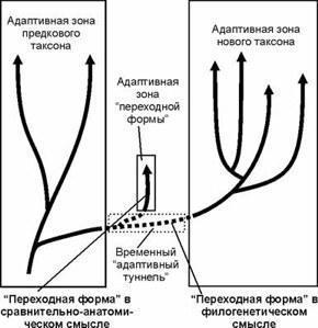 paleomagnetska definicija datiranja