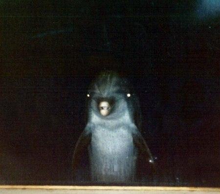 Дельфин за окном