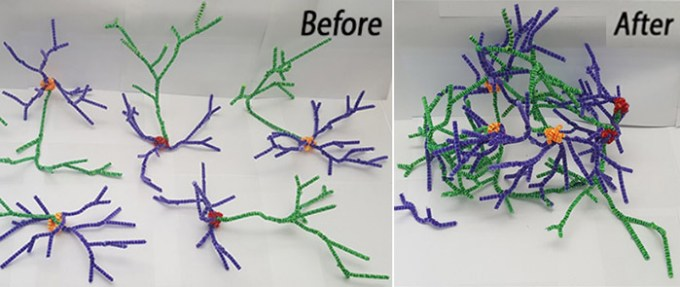 pipe cleaner neurons