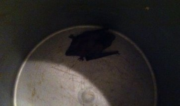 Bat Removal Call Alpharetta