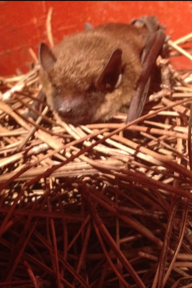 Hand Removal of Bat in Alpharetta