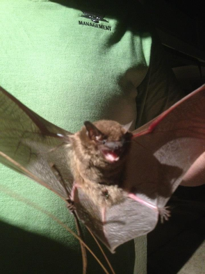 Bat Removed from Gainesville GA