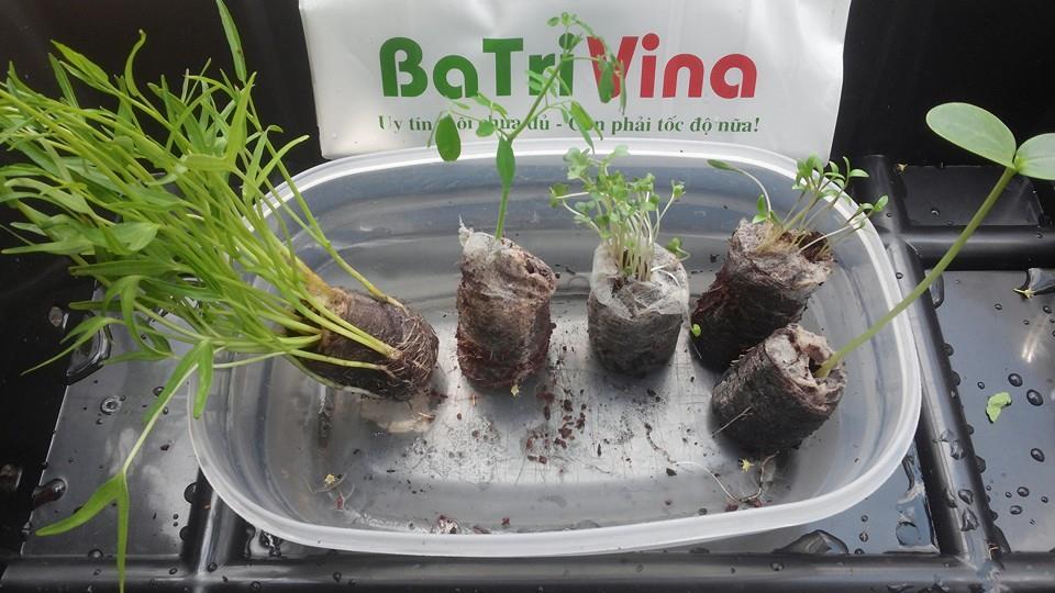 Hướng dẫn sử dụng viên nén ươm hạt - các dùng viên nén ươm hạt batrivina