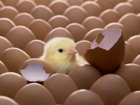 egg_20hatch1