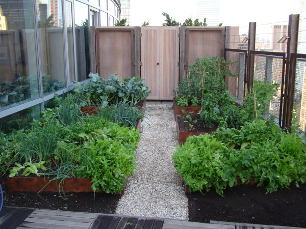 vegetable roof garden Visionaire Veggies | Battery Rooftop Garden Blog