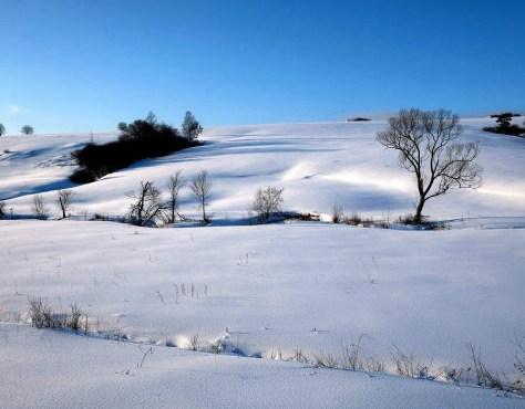 Snow fields. Polski vos