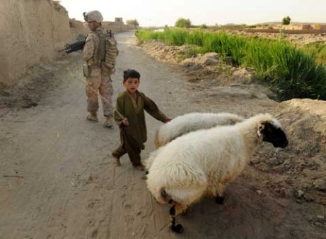 Marines with 3rd Battalion, 6th Marines patrol by a child tending sheep in Marjah, Afghanistan. (Tom Brown//Staff)