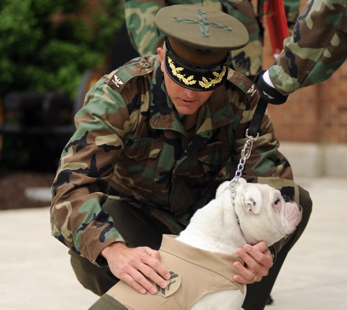 Cpl. Chesty XIII gets his new chevron at Marine Barracks Washington