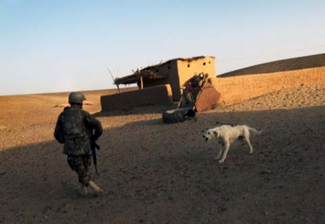 An Afghan soldier patrolling with Marines recoils after a dog begins snarling at him. (Thomas Brown/Staff)