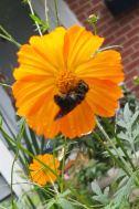 bee-in-garden
