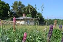 ecotopia-2018-strawbale-workshop-184b