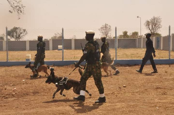 Counter-Terrorism: NAF Inducts K-9 Dogs for Military Operations