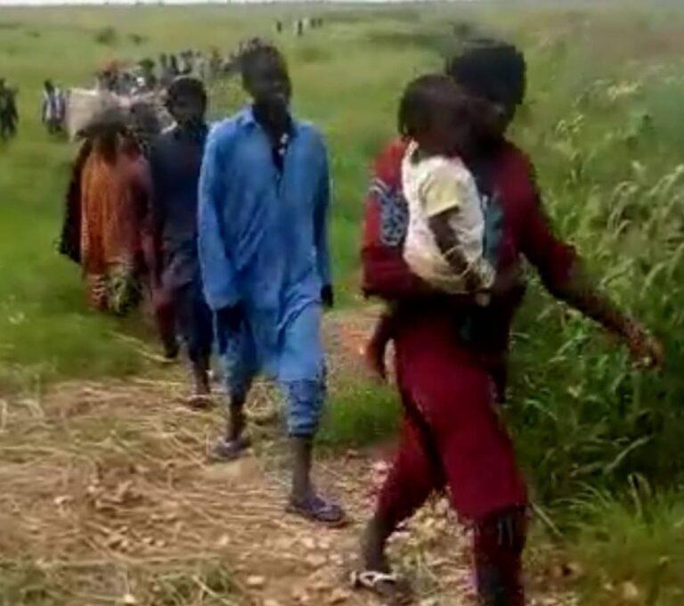 VIDEO: Massive Surrender at Mafa as Nigerian Military Receives 1,500 ISWAP-Boko Haram Members so Far