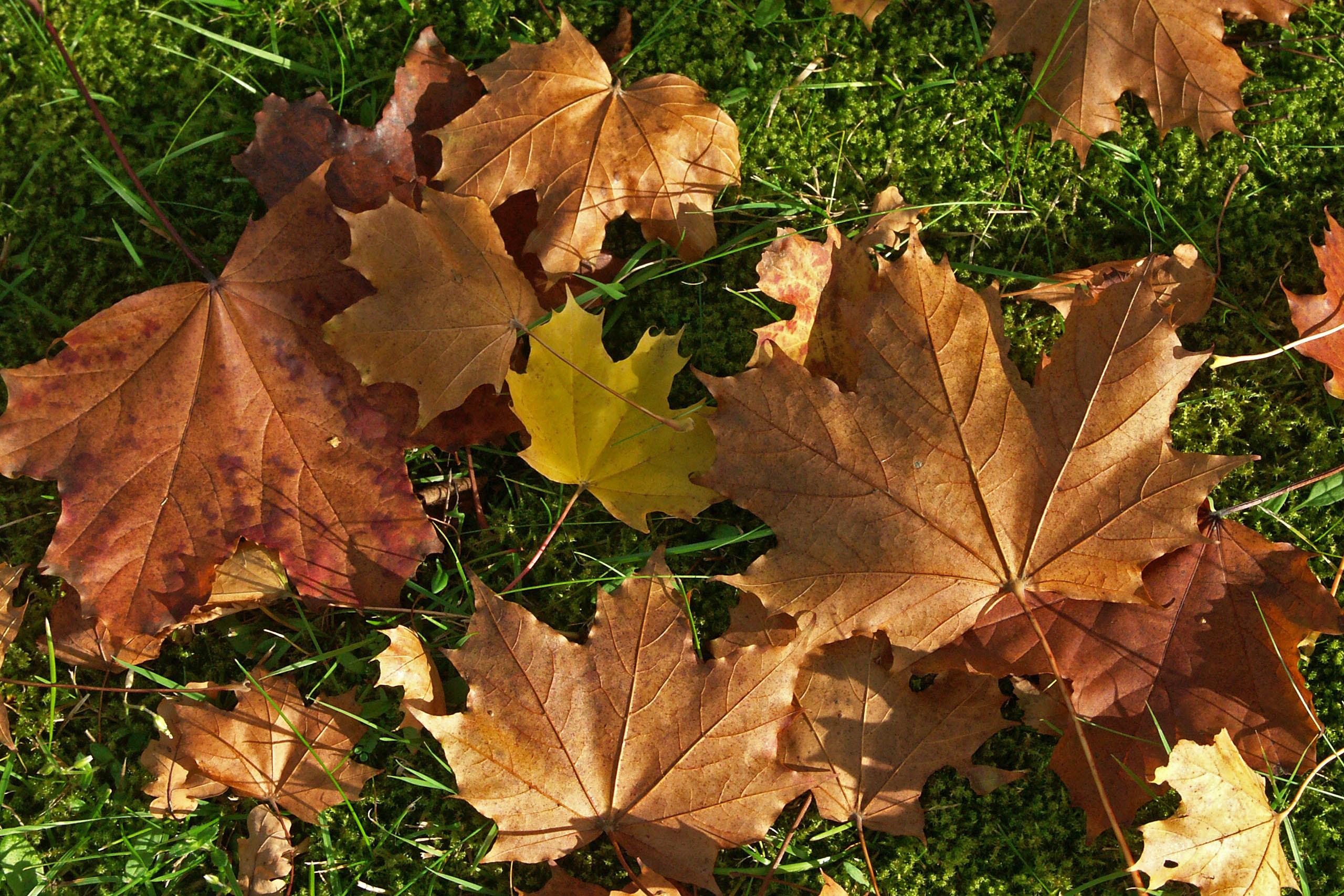 Obstbäume im Herbst pflanzen