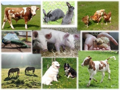Tiere Bauernhofurlaub