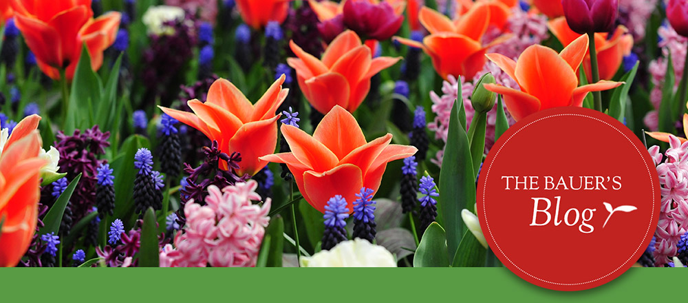 Perennial Blooming Calendar - image of perennials