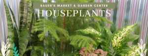 Pottery & Houseplant sale @ Bauer's Market & Garden Center | La Crescent | Minnesota | United States