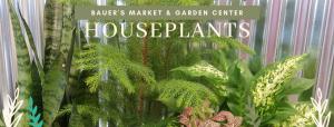Pottery & Houseplant sale @ Bauer's Market & Garden Center | La Crescent | Minnesota | United States