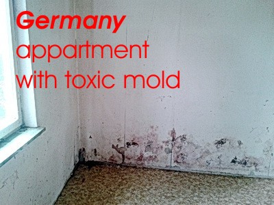 germany refugees welcome appartment with toxic mold