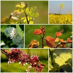 Frühlings Mix