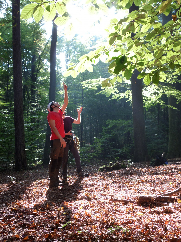 Baumansprache - Pflegemaßnahmen werden auf jeden Baum individuell zugeschnitten