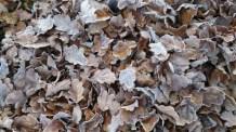 Laub und Frost