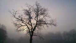 Baumsilhouette im Nebel und Sonnenschein