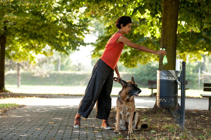 Vorschläge für Hundekotbeutel-Stationen in Baunatal gesucht