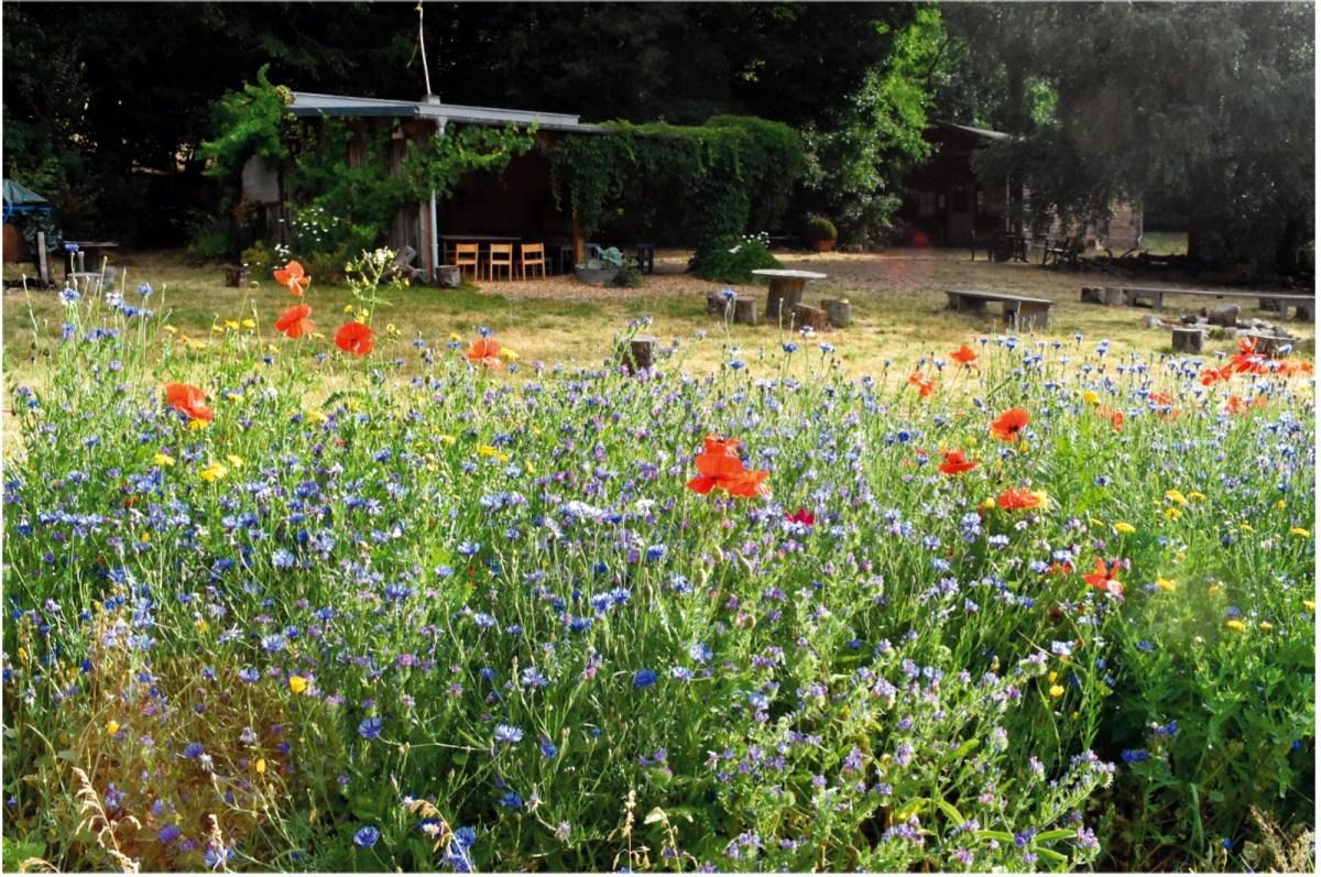 #baunatalwirdbunter - Baunataler Blühmischung zum Erhalt der Artenvielfalt