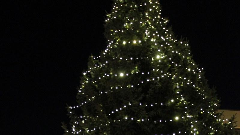 Baunataler Weihnachtsbäume werden am 11. und 12. Januar 2019 eingesammelt
