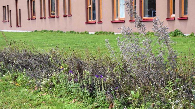 Blühstreifen in Baunatal auch im Winter nützlich