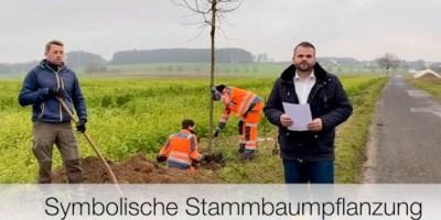 Stammbaum, Baunatal, Daniel Jung, 2020