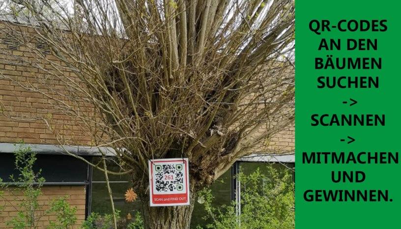 Baunatal, Baum, QR Code