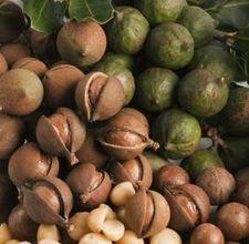 https://i1.wp.com/bauplemuseum.com/images/macadamia-nuts.jpg