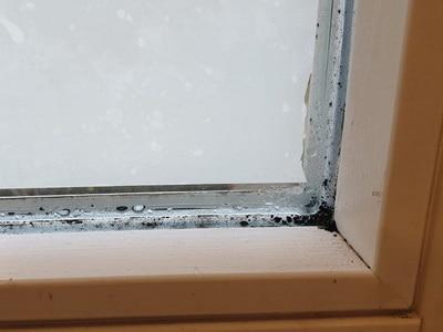 Gutachter, angelaufene Fensterscheiben Schimmel an Fenster, Schimmelgutachten Schimmelgutachter