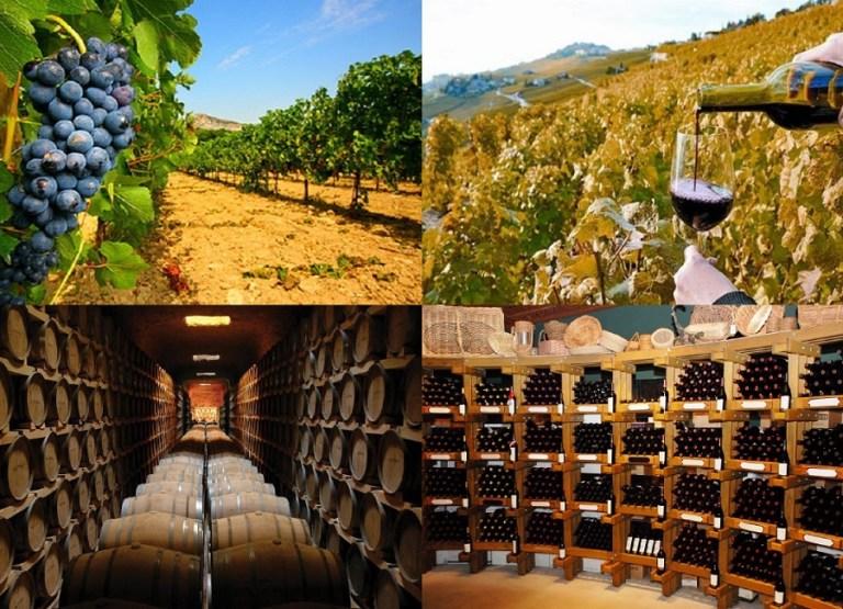 Los 10 mejores vinos del mundo