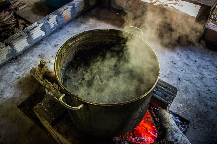 1200px Ayahuasca brewing 02