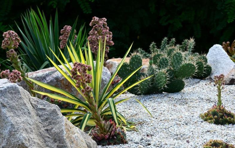 Der richtige steingarten aufbau bauen und wohnen in der schweiz - Steingarten anlegen aufbau ...