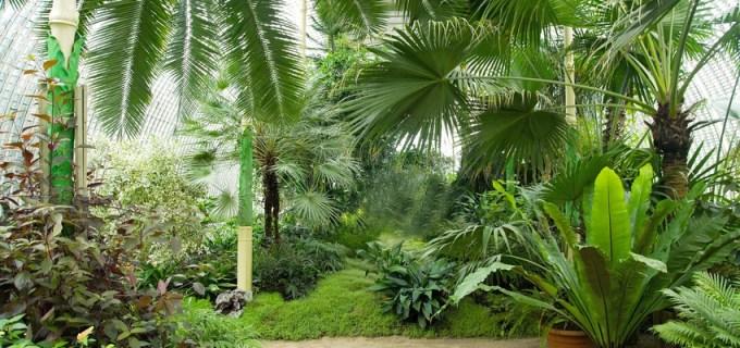 Wintergarten Pflanzen richtig aussuchen