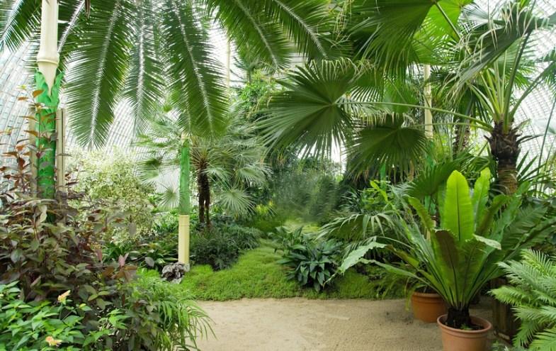 Ein Wintergarten mit tropischen Pflanzen