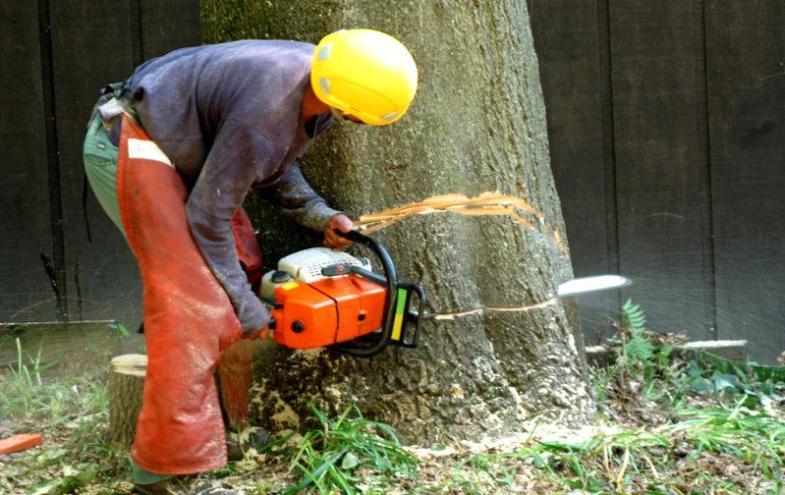 Baum Fällen Kosten Forum