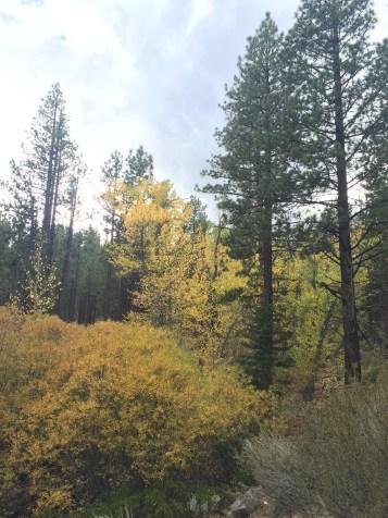 Fall colors in Reno Nevada Galena Creek Park