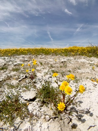Carrizo Plain Wildflowers Soda Lake