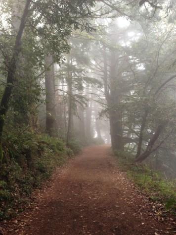 fog at purisma