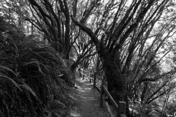 Stinson-black and white01